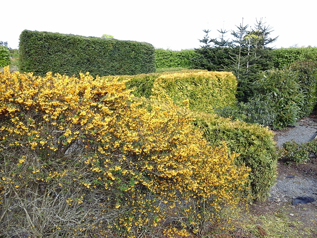 Understanding The Definition Of Hedge In All Its Incarnations - world of hedges
