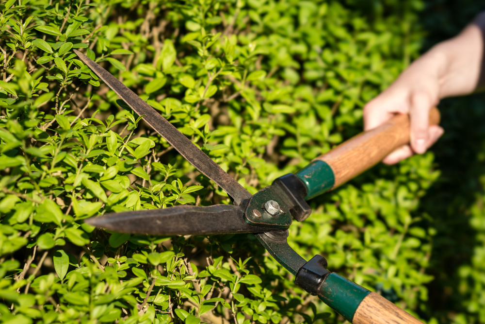 What You Need To Know About Hedge Maintenance In The Summer - world of hedges
