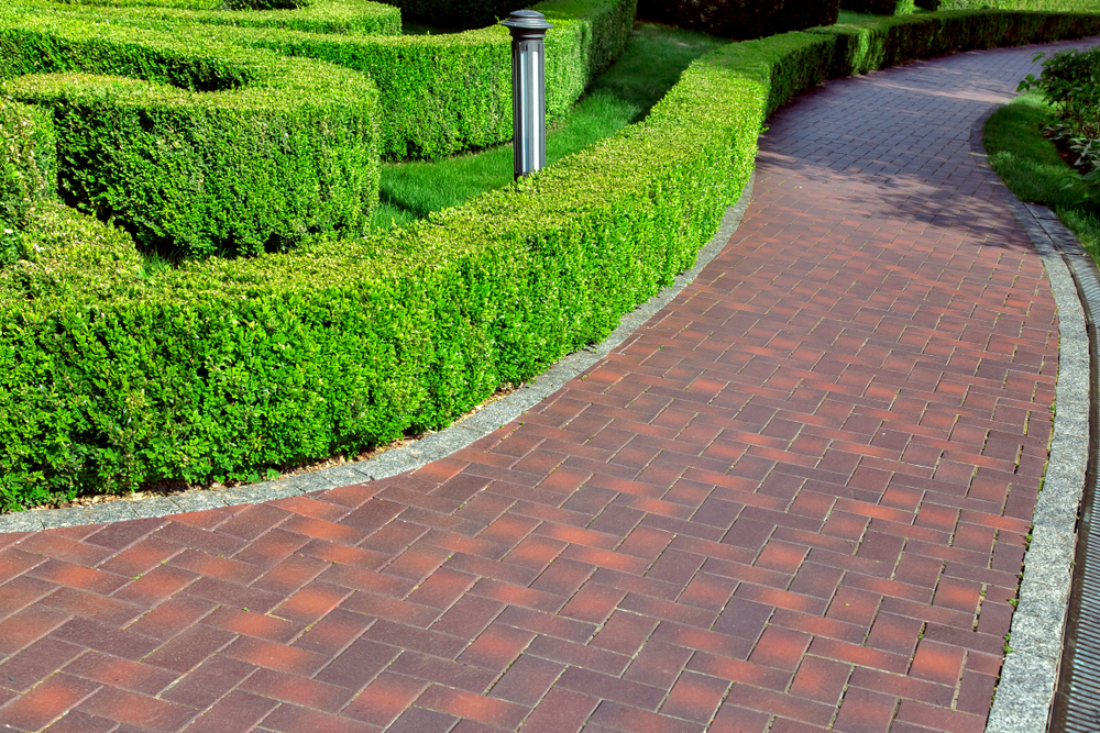 What To Consider When You Buy Hazel Hedges - world of hedges