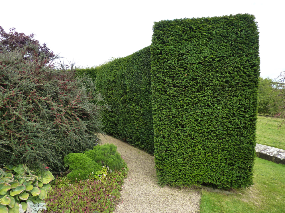 Types Of Hedging Plants To Give Privacy - world of hedges