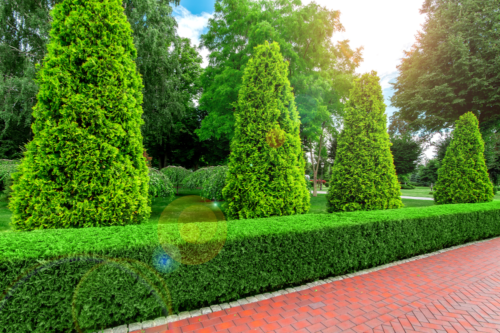 Using Evergreen Hedges To Enhance Any Landscape - world of hedges