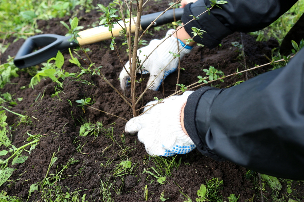 How To Plant A Hedge For Greenery And Privacy - world of hedges