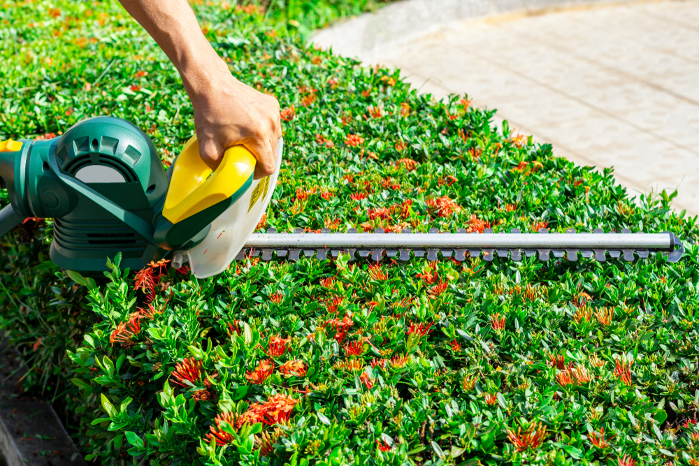 Tips For Hedge Maintenance In The Summer - World Of Hedges