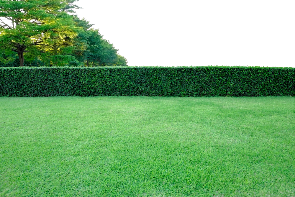 Get Your Hedges Ready For Spring - World of Hedges