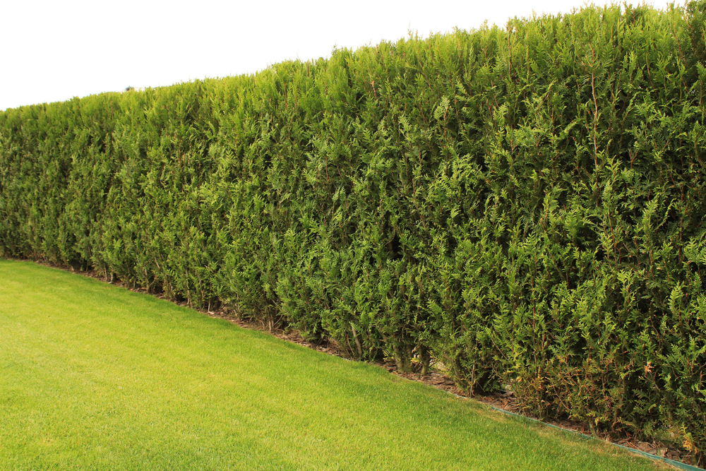 Know How Hedges Help Wildlife Habitat Today - World Of Hedges
