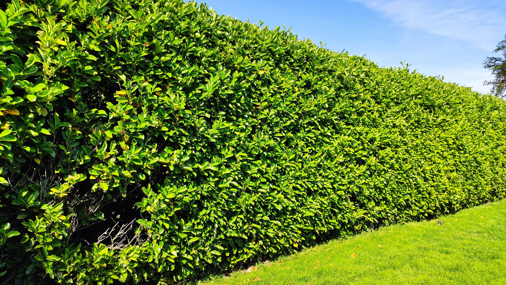 The Importance Of Hedges To Nesting Birds Today - World of Hedges