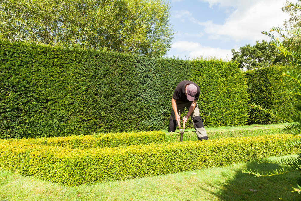 How Often Should You Cut A Hedge? - World Of Hedges