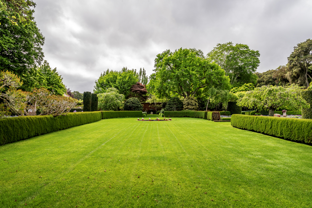 What Is The Definition Of 'A Hedge' - World Of Hedges